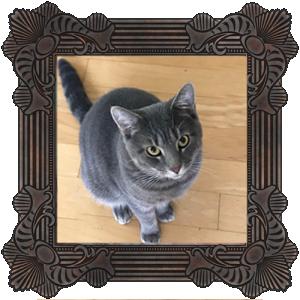 new-cat_helen