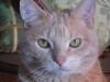 090309010121_kittycloseup